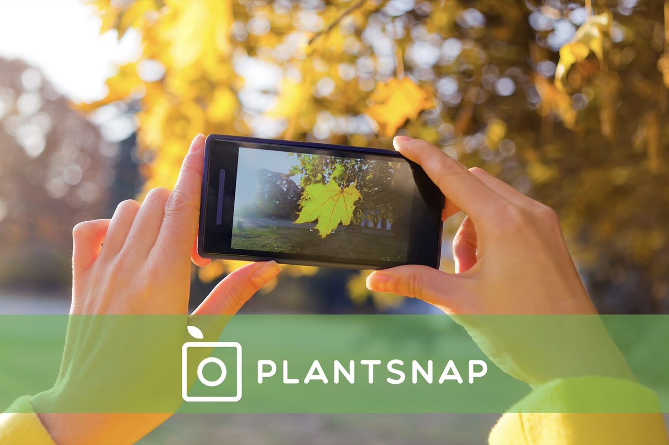 mobapp,apps,news,app of the week,plantsnap,plants,garden,forest,nature,plant,flower,kind,app,photo,identify,pictures,information,scientific classification ,growing area,search,iOS,Android,